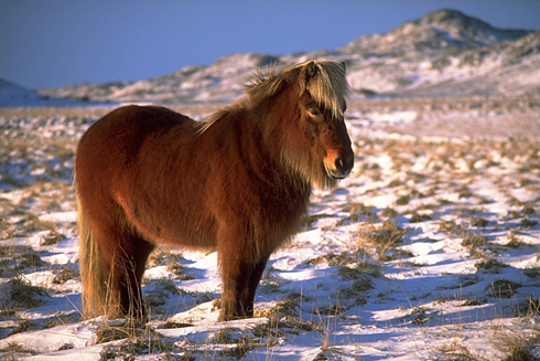 Horses in middle earth 89c2a8ff3e5f870